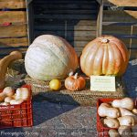 Five delicious Italian Fall products