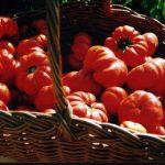 An Italian perspective on Gardening