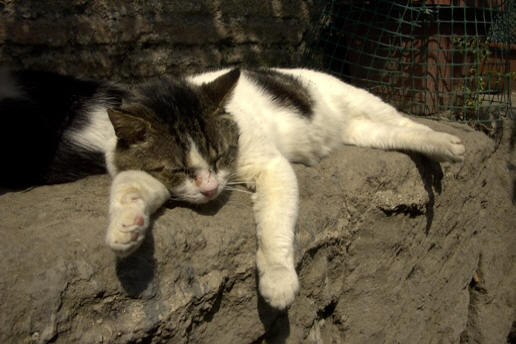 abandoned cats of rome
