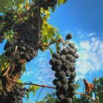 Wines of Central Italy