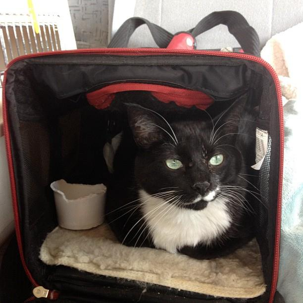 traveling to europe with a pet