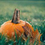 pumpkin risotto