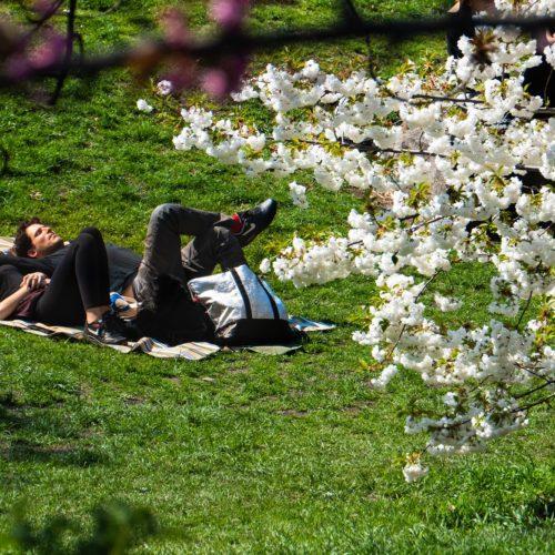 enjoying the sun in a park