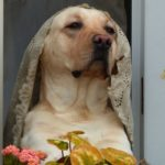 Adopting a Family Dog in Italy: Here's What You Need To Know
