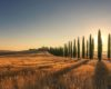 Top 10 Organic Farms in Italy – Agriturismo accommodation in Tuscany
